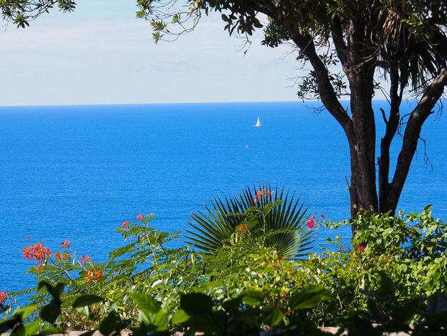 Blick auf das Meer von Guana IslandQuelle: Guana Island von Nina Hale (CC BY 2.0)