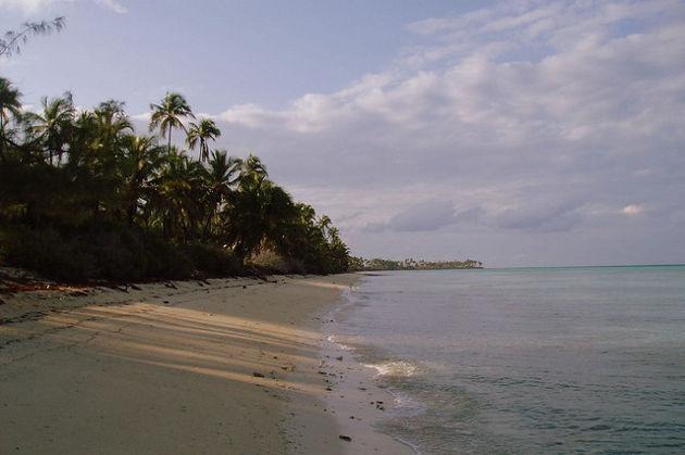 Emerald Palms auf Andros / BahamasQuelle: Andros von Scott Clark (CC BY 2.0)